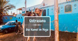 Yoga Kamel