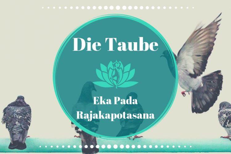 Yoga Taube / Königstaube: Kapotasana / Eka Pada ...
