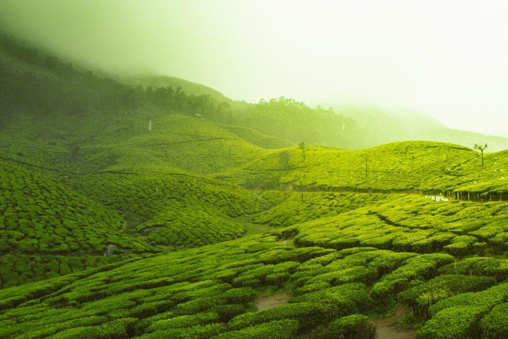 india fields