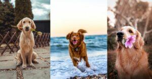 Hundefreundlicher Wochenend-Urlaub: So bereitest du dich vor
