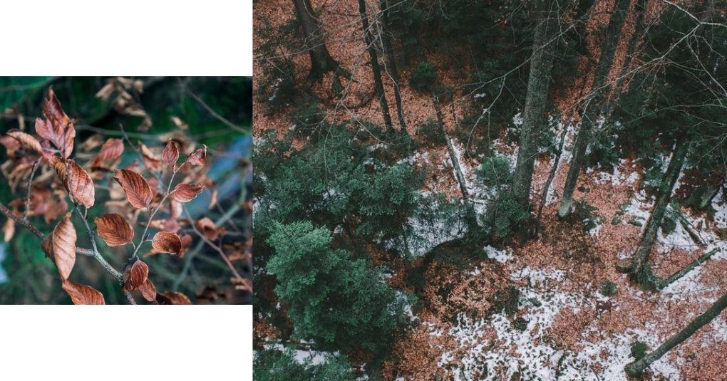Ein Guide für atemberaubende Bayerischer Wald Yoga Retreats
